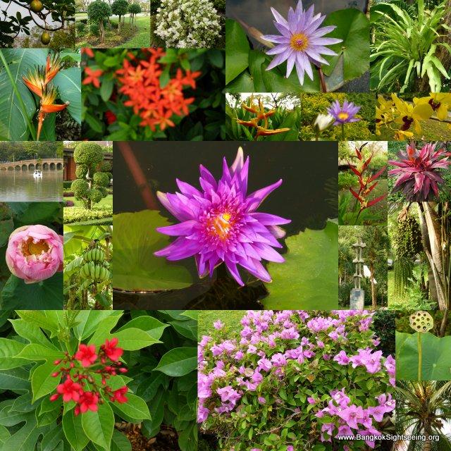 Bangkok Park Impressions